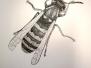 Federzeichnung Insekten
