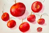 Giseles Früchtebild 2