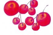Giseles Früchtebild