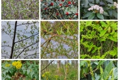 Annegrets Pflanzen 1