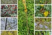 Annegrets Pflanzen 2