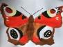 KWS Wunderwelt Insekten